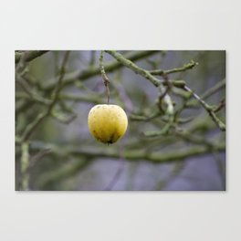 Winter Apple Canvas Print