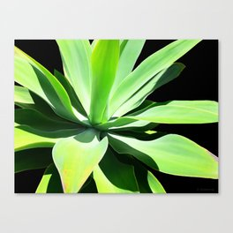 Succulent Agave Art by Sharon Cummings Canvas Print