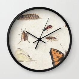Sheet of Studies of Nine Insects (1660-1665) by Jan van Kessel Wall Clock