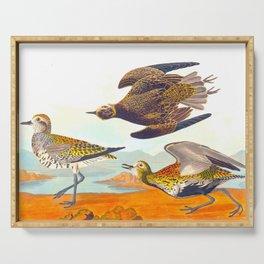 Golden Plover John James Audubon Scientific Birds Of America Illustration Serving Tray