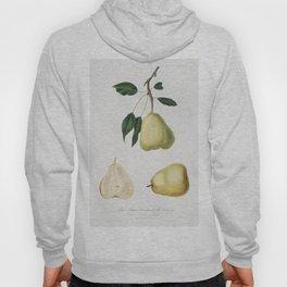 Pear (Pyrus communis) from Pomona Italiana (1817 - 1839) by Giorgio Gallesio (1772-1839) Hoody
