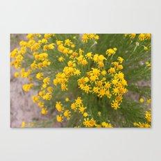 Yellow Wild Flowers Canvas Print