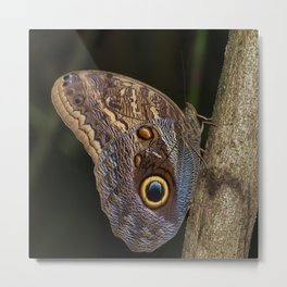 Owl butterfly in Costa Rica - Tropical moth Metal Print