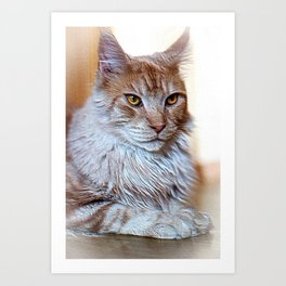 Nugget the golden main-coone-cat Art Print