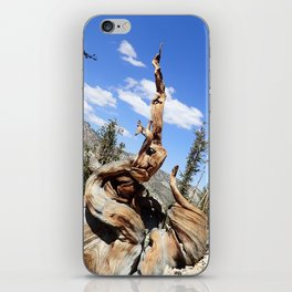 Oldest living things on earth iPhone Skin