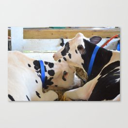 Pair of black and white cows 1 Canvas Print