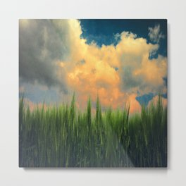 barley field Metal Print
