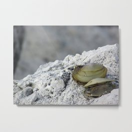 Clamshells Metal Print