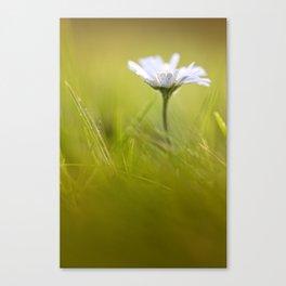 Sweet Daisy! Canvas Print