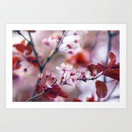 Hill Cherry - Yamazakura - Cherry Blossom Art Print