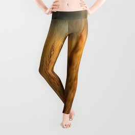Harvest Time - Golden Wheat in Colorado Field Leggings