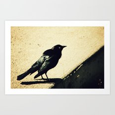 Little Blackbird Art Print