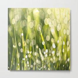 Beautiful Morning Dew On A Green Grass #decor #society6 #buyart Metal Print