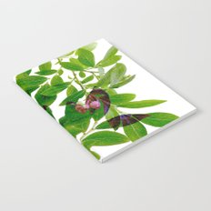Blueberry Branch in Spring Notebook