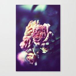 Rose In Blue Fog Canvas Print