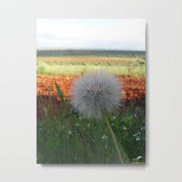 no wind Metal Print