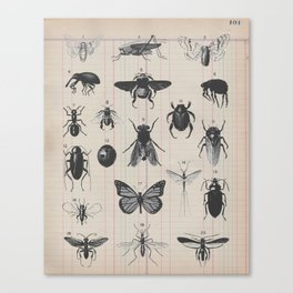 Vintage Insect Study on antique 1800's Ledger paper print Canvas Print
