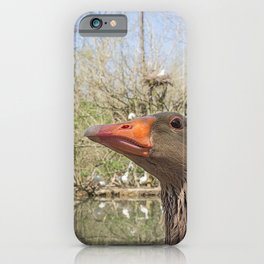 Close up portrait of Greylag goose iPhone Case
