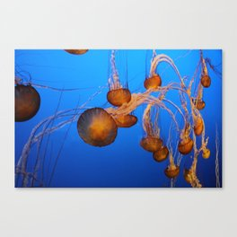 Floating In Blue Water Canvas Print