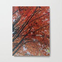 Acer rubrum Metal Print