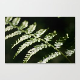 Fern up close Canvas Print