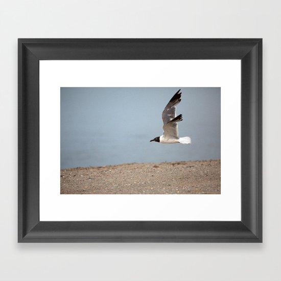 Laughing Gull in Flight Framed Art Print