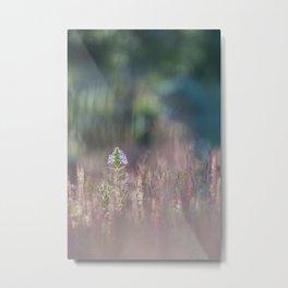Field of flowers illuminated by sunrise Metal Print
