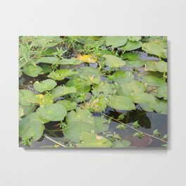What's Lurking In There? Metal Print
