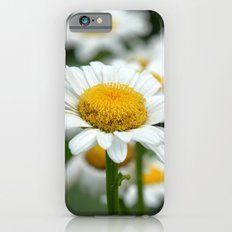 Field of Daisies Slim Case iPhone 6s