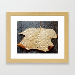 Magic Carpet Leaf Framed Art Print