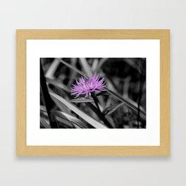 Popping Purple Framed Art Print