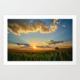 Iowa Corn Fields Art Print