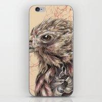 hawk iPhone & iPod Skins featuring Hawk by Adrian Chin