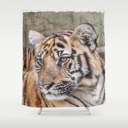 Tiger, Medium Indo-China Shower Curtain