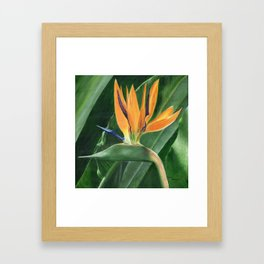 Simply Elegant by Teresa Thompson Framed Art Print