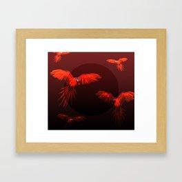 Papagei sunset Framed Art Print