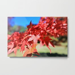 Japanese Maple Leaves 2 Metal Print