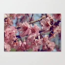 Sakura... One Spring in Beijing Canvas Print