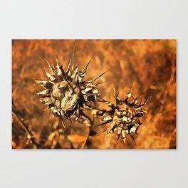 Dried Suns Canvas Print