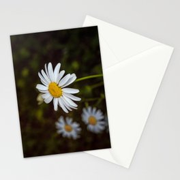 Daisy in all its glory Stationery Cards