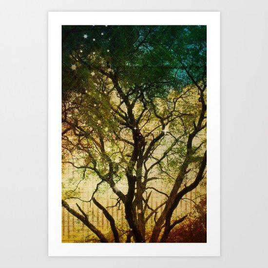 Big Tree in the Sunlight Art Print