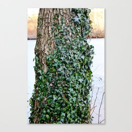 Covered in Ivy Canvas Print