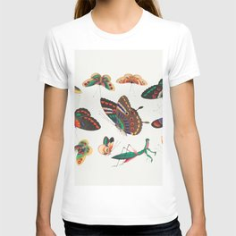 Chinese butterfly and insect painting from the Qing Dynasty T-shirt