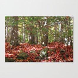 Lye Brook Falls trail Canvas Print