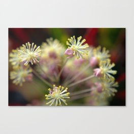 Kahalu'u Flowers at Sunrise Canvas Print