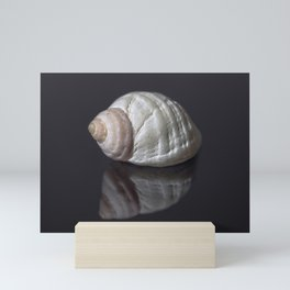 Seashell snail reflection Mini Art Print