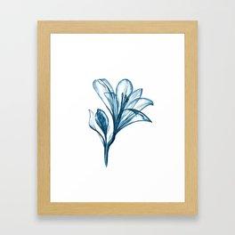 Indigo Lilly Flower Watercolor Illustratior Framed Art Print