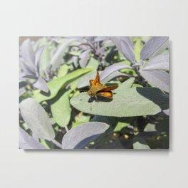 Skipper Butterfly Metal Print