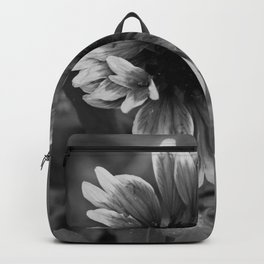 Beautful black and white gerbera flower. Backpack