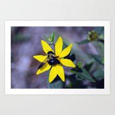 Bee on Yellow Art Print